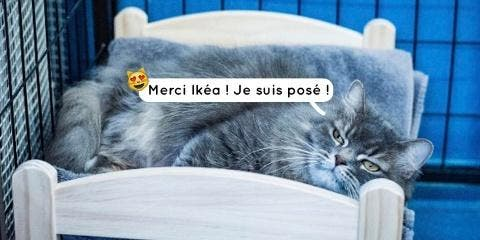 Ikéa offre des mini-lits pour les chats aband...