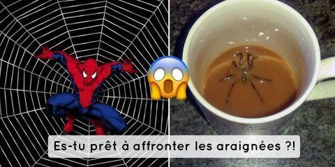 14 photos pour tester si tu as peur des araig...