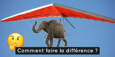 7 différences impressionnantes entre un éléph...