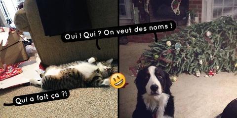 20 photos de chats et chiens qui n'aiment vra...