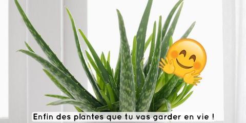 Si t'es un serial killer de plantes, en voici...