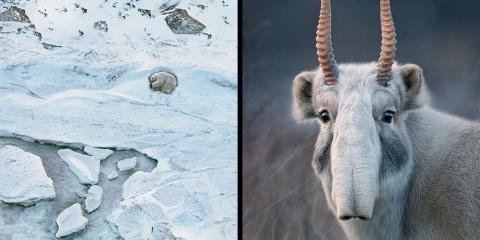 8 portraits magnifiques d'animaux en voie de...