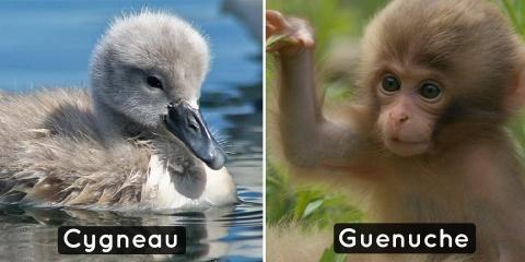 9 bébés animaux dont on ne connaît pas le nom