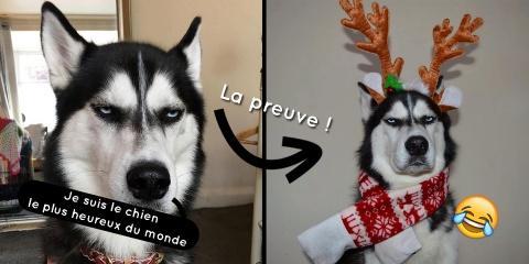 Elle fait des photos de Noël avec son chien e...