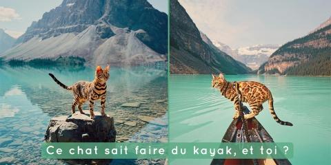 Ce magnifique chat mène une vie d'aventures q...