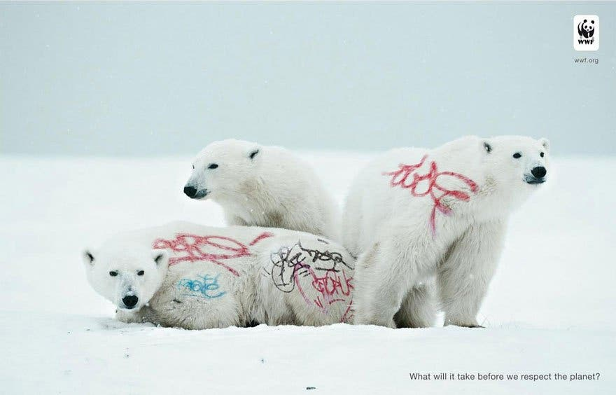 ours blanc graf