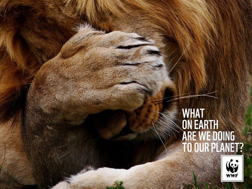 lion main