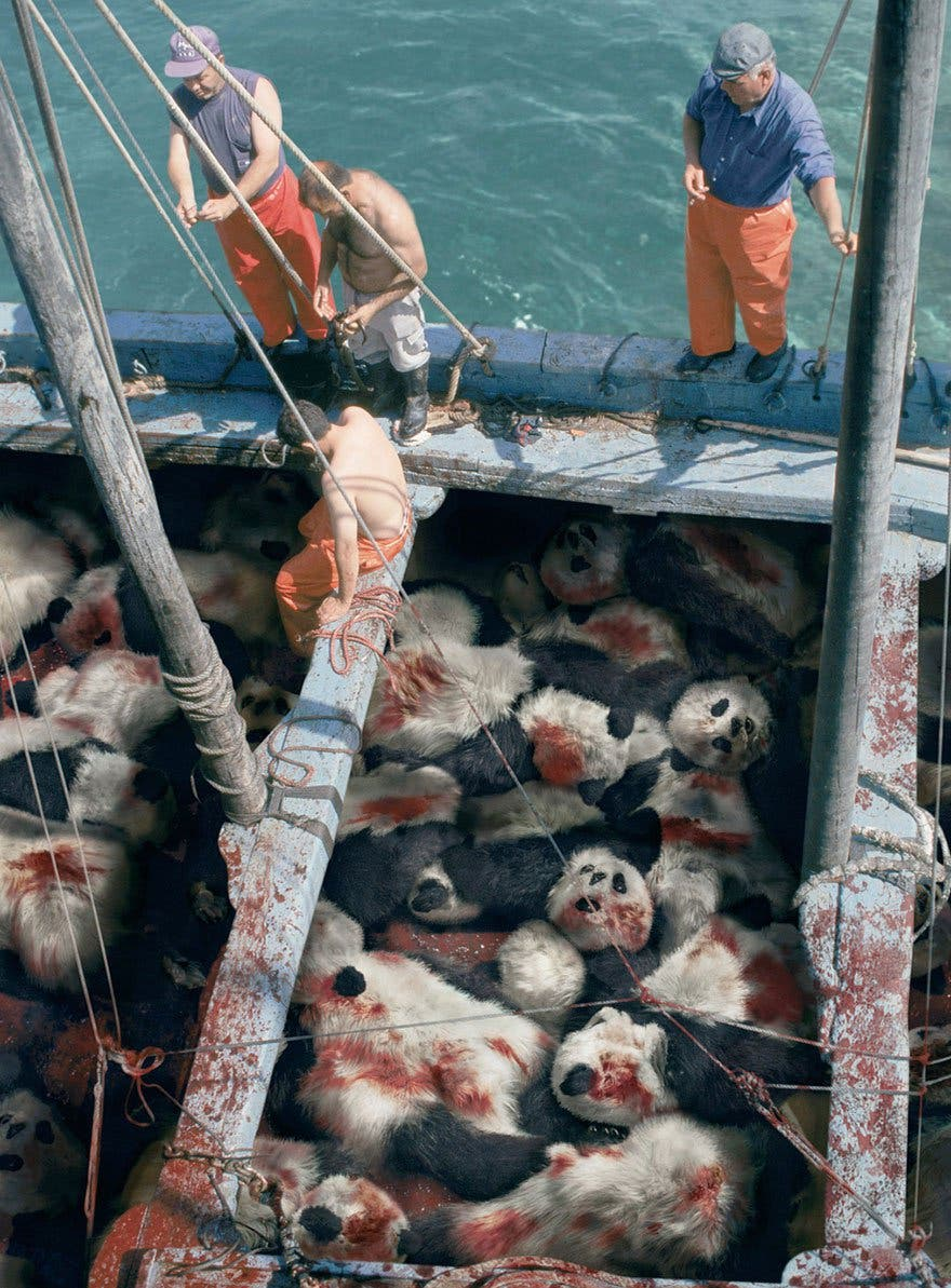 panda pêche