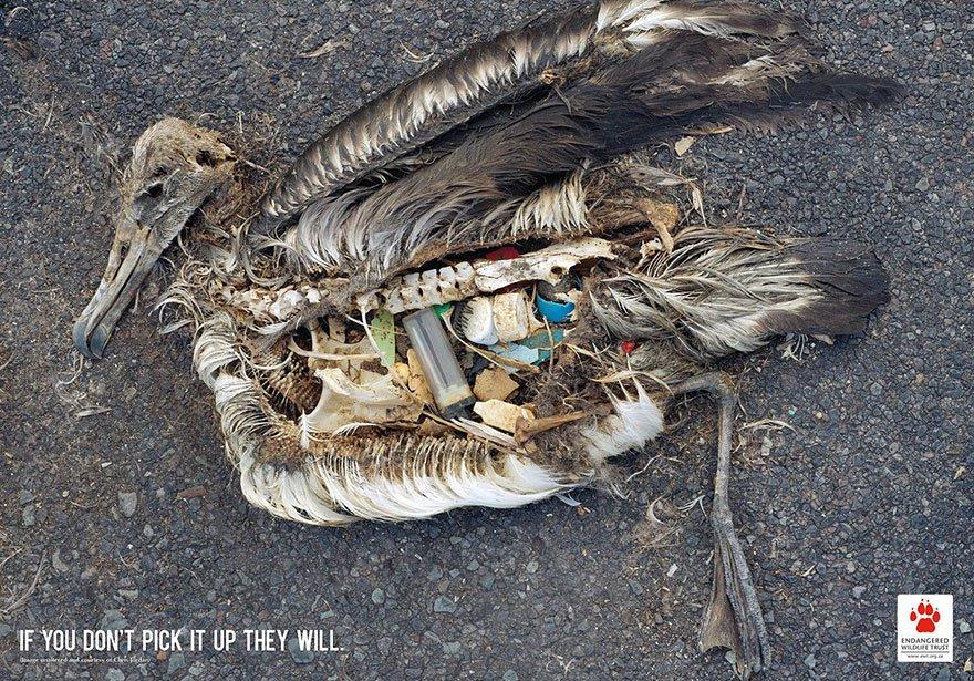 oiseau poubelle