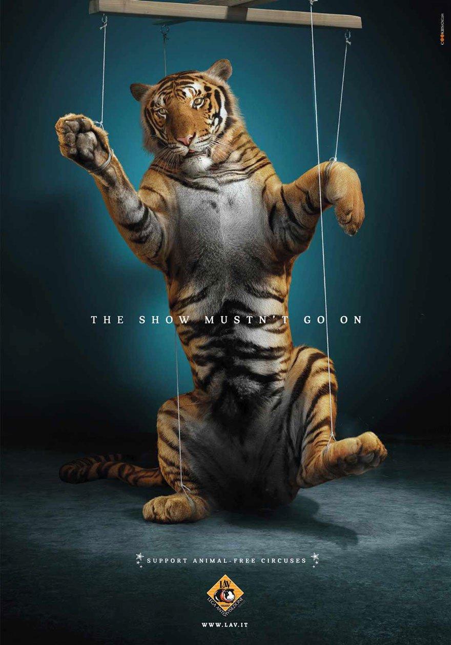tigre cirque