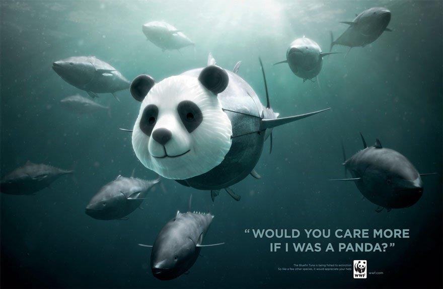 panda poisson