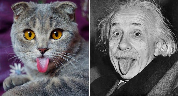 chat einstein