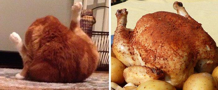 chat poulet