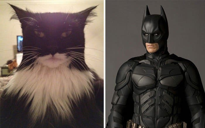 chat batman