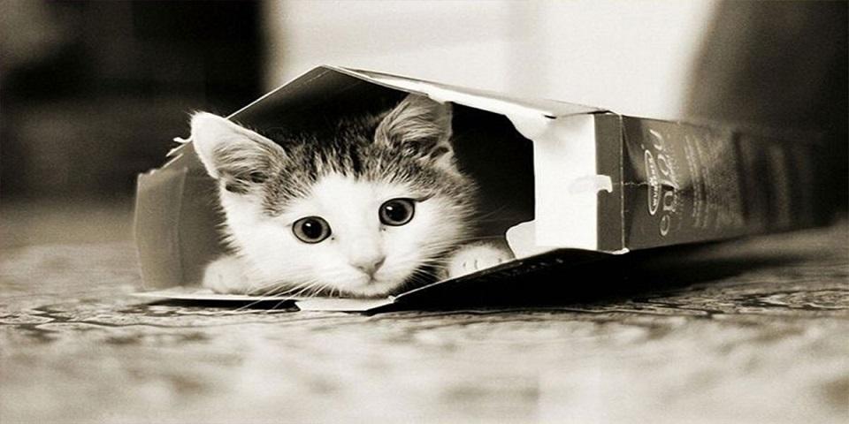 les scientifiques nous expliquent enfin pourquoi les chats adorent se cacher dans des bo tes. Black Bedroom Furniture Sets. Home Design Ideas