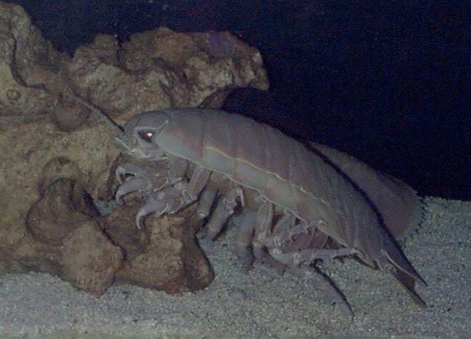 profondeurs océan