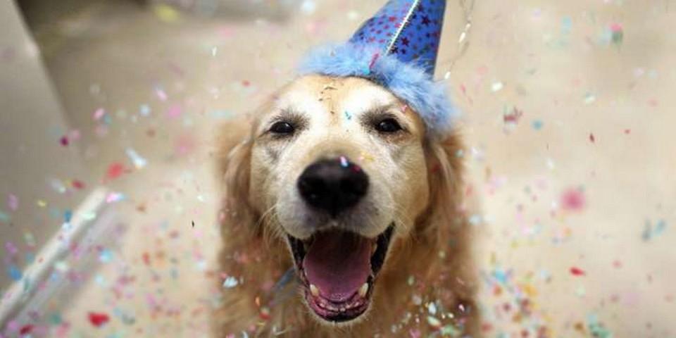Age Reel Chien vous pensez qu'une année humaine en vaut 7 pour un chien ? c'est faux !