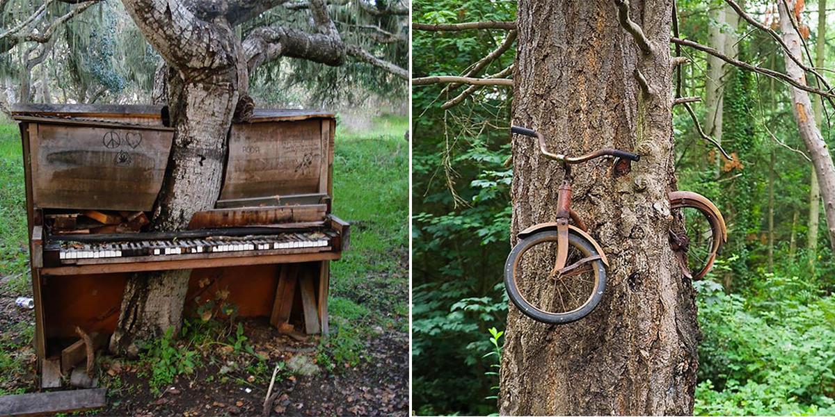 "Dans les parties radioactives de Tchernobyl"" Piano-velo-absorber-arbre"