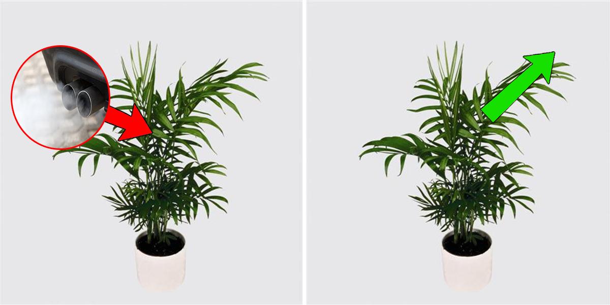 9 plantes d polluantes qui purifieront votre int rieur. Black Bedroom Furniture Sets. Home Design Ideas