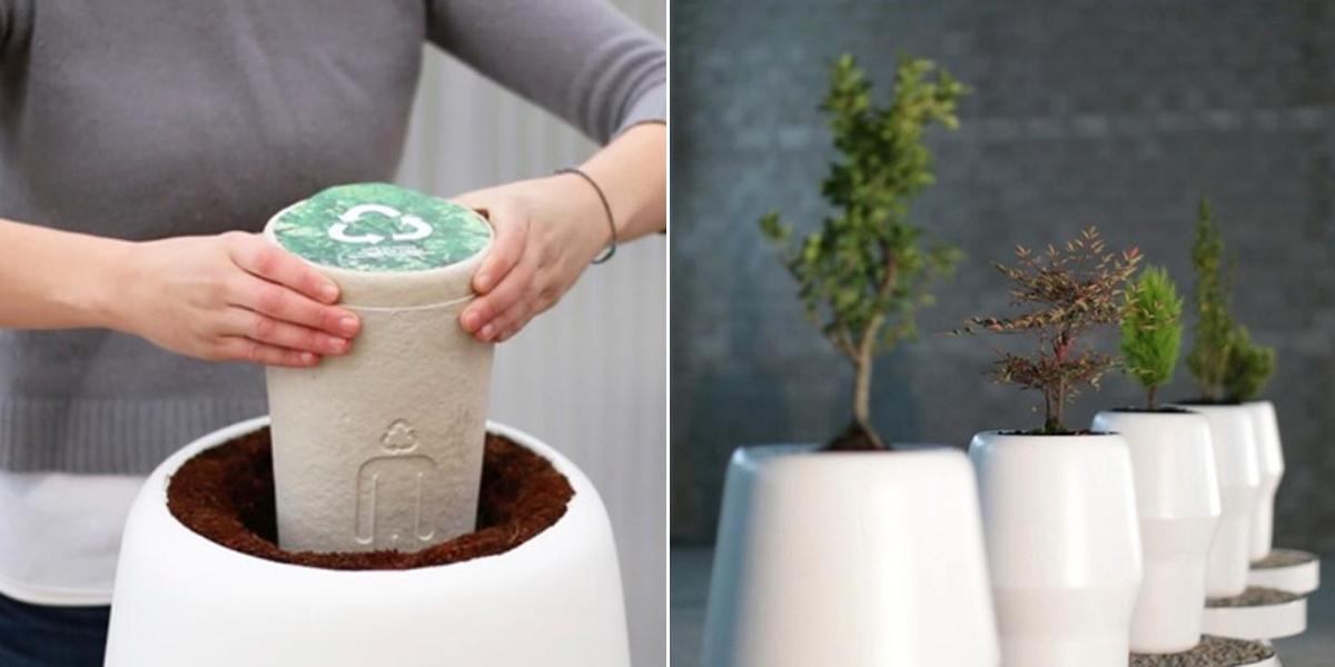 devenez un arbre apr s votre mort gr ce cette urne biod gradable. Black Bedroom Furniture Sets. Home Design Ideas