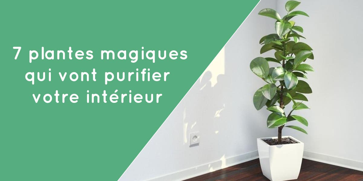 7 Plantes Qui Purifient L'Air De Votre Maison