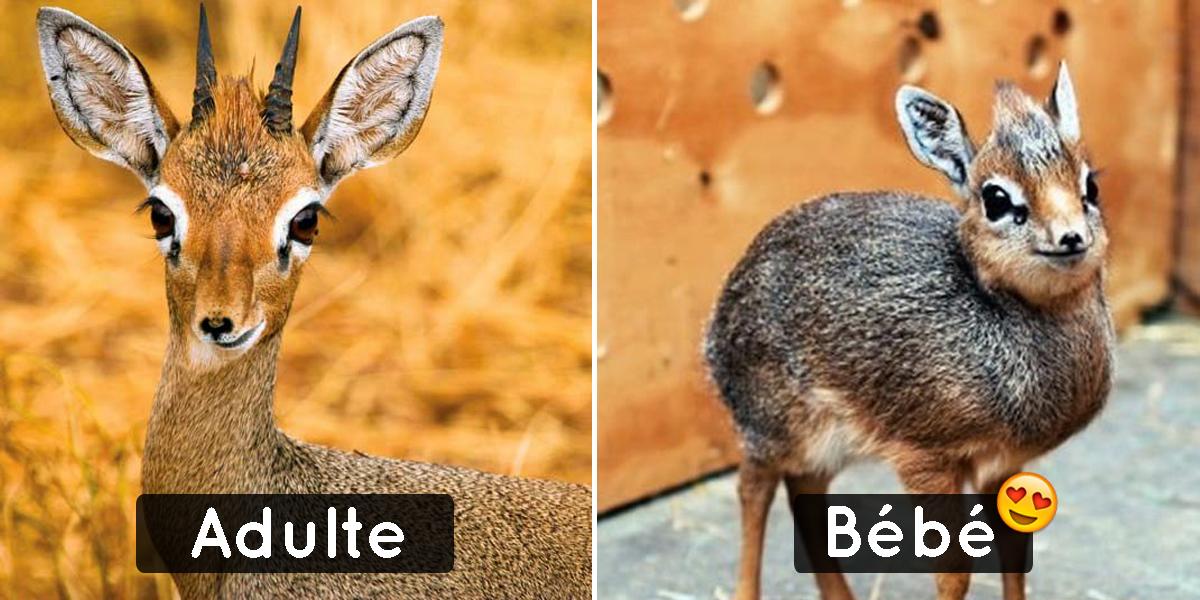 20 esp ces d 39 animaux rares dont les b b s sont les plus - Dessin d animaux trop mignon ...