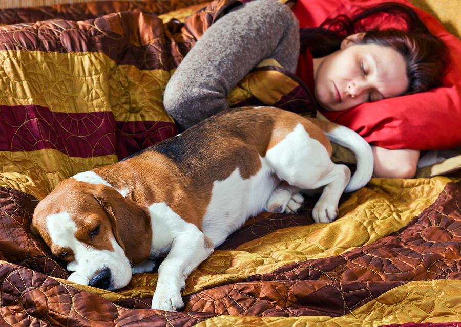 dormir, animal, compagnie, chien