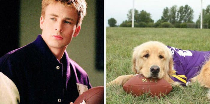 People Chris Evans Golden Retriever compte Twitter ressemblances photographie humour ballon