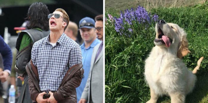 People Chris Evans Golden Retriever compte Twitter ressemblances photographie humour langue