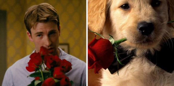People Chris Evans Golden Retriever compte Twitter ressemblances photographie humour rose