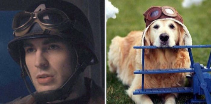 People Chris Evans Golden Retriever compte Twitter ressemblances photographie humour soldat