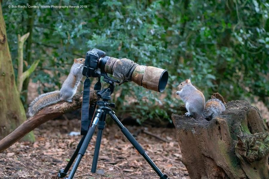 photo, concours, comedy wildlife photography