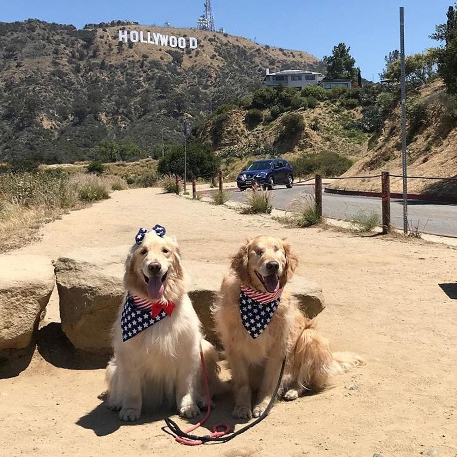 chiens, hollywood, foulards