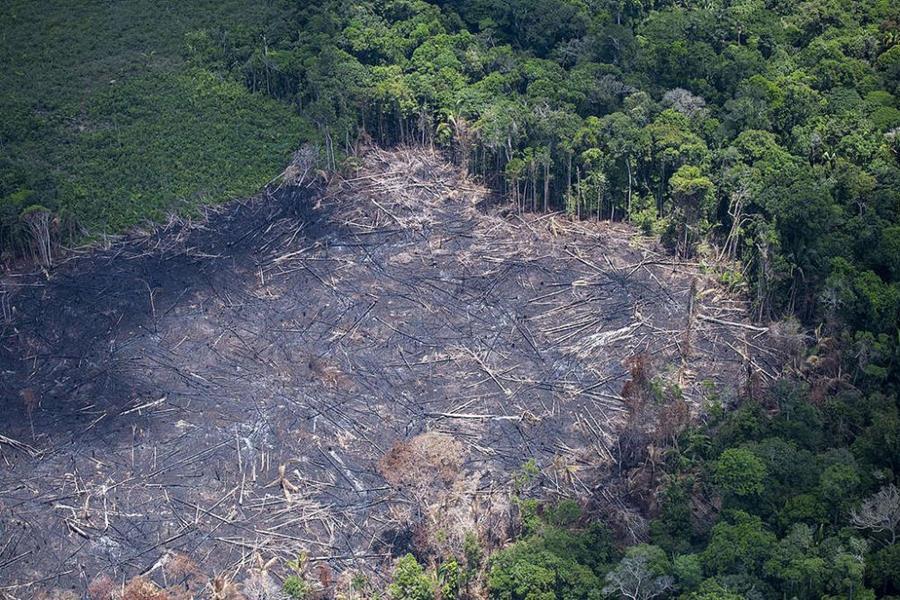 En un an, la déforestation de la forêt amazonienne au augmenté de 278%