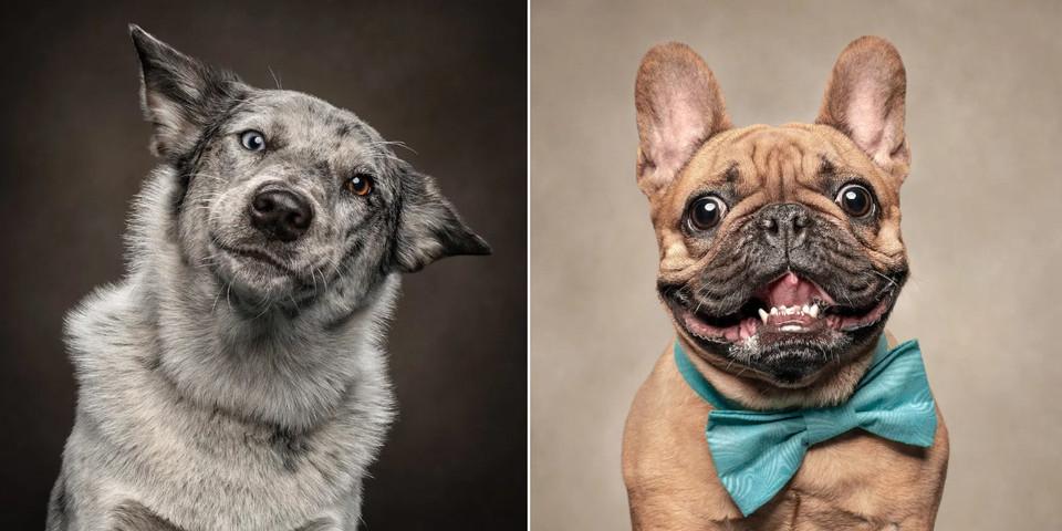 Ils photographient l'immense beauté des expressions faciales des chiens