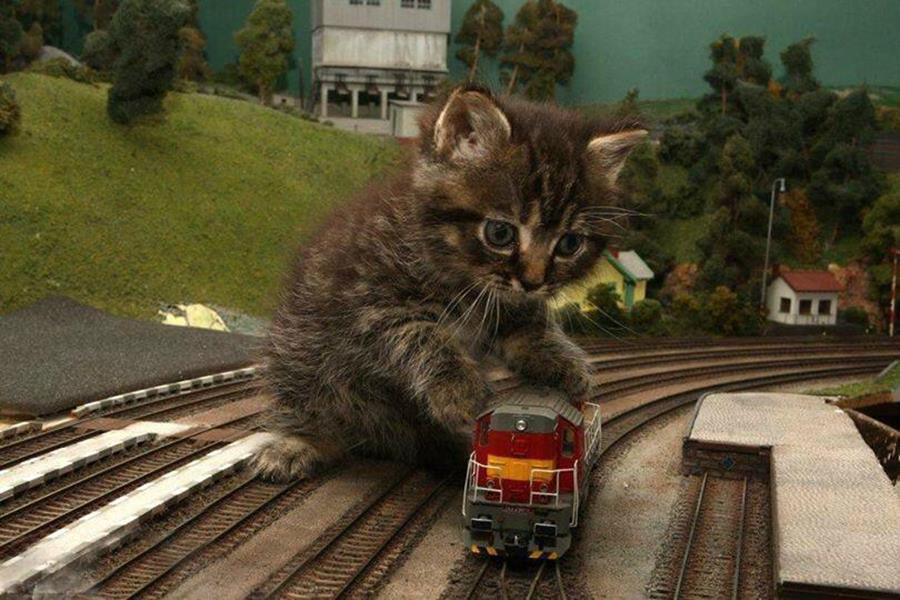 7 preuves qu'un chat est mille fois supérieur à un train