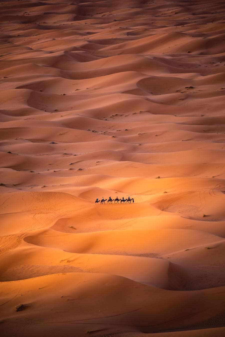 photo, finaliste, agora awards, désert
