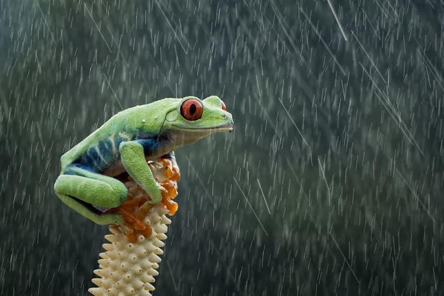 photo, finaliste, agora awards, grenouille