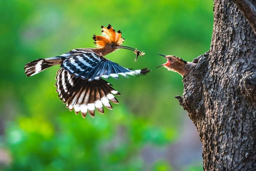photo, finaliste, agora awards, oiseau
