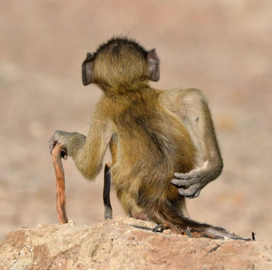comedy wildlife photography awards, 2020, concours, photo, finaliste