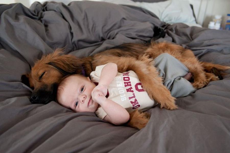 chien, bébé, amoureux, photo, animaux