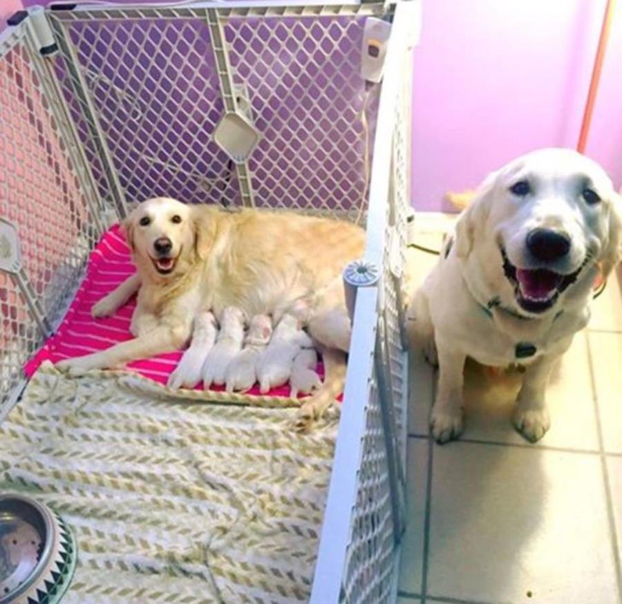 chien, parents, enfants, animaux, bébé, mignon