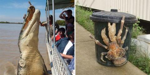 12 animaux tellement grands qu'on a du mal à...