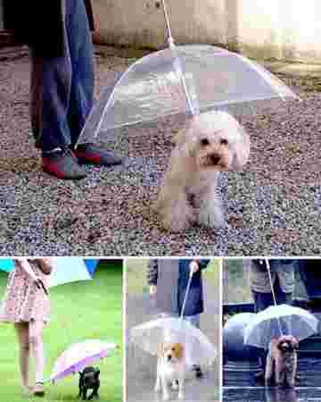 ombrelle à chiens