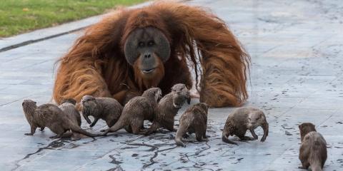 Dans ce zoo les animaux se rencontrent et cré...