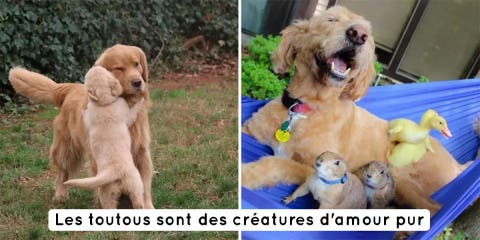 10 photos qui prouvent que les chiens sont de...
