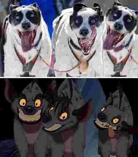 Ressemblance vie réelle et Disney chiens hyènes Roi Lion