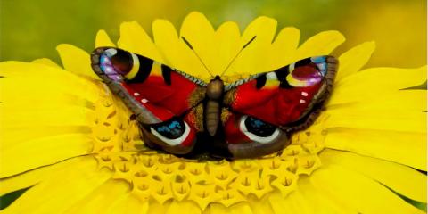 Ce papillon n'est pas réel, c'est un chef d'o...