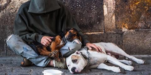 Une nouvelle structure va permettre aux sdf de dormir avec leurs chiens 6464f69f117
