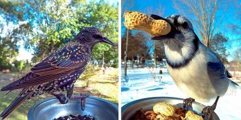 Elle installe un photomaton à oiseaux dans so...